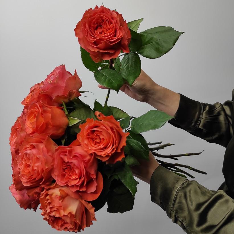 img 20201122 152448 - Роза цвета огня