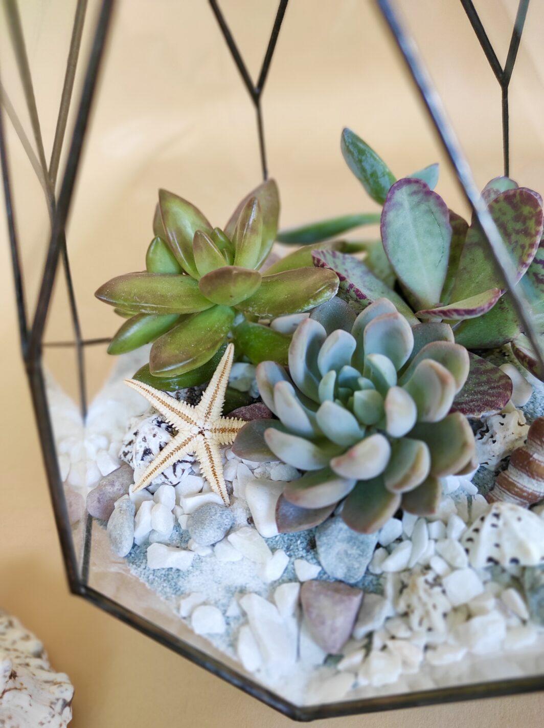 Флорариум Pear micro 4123 13/13/22