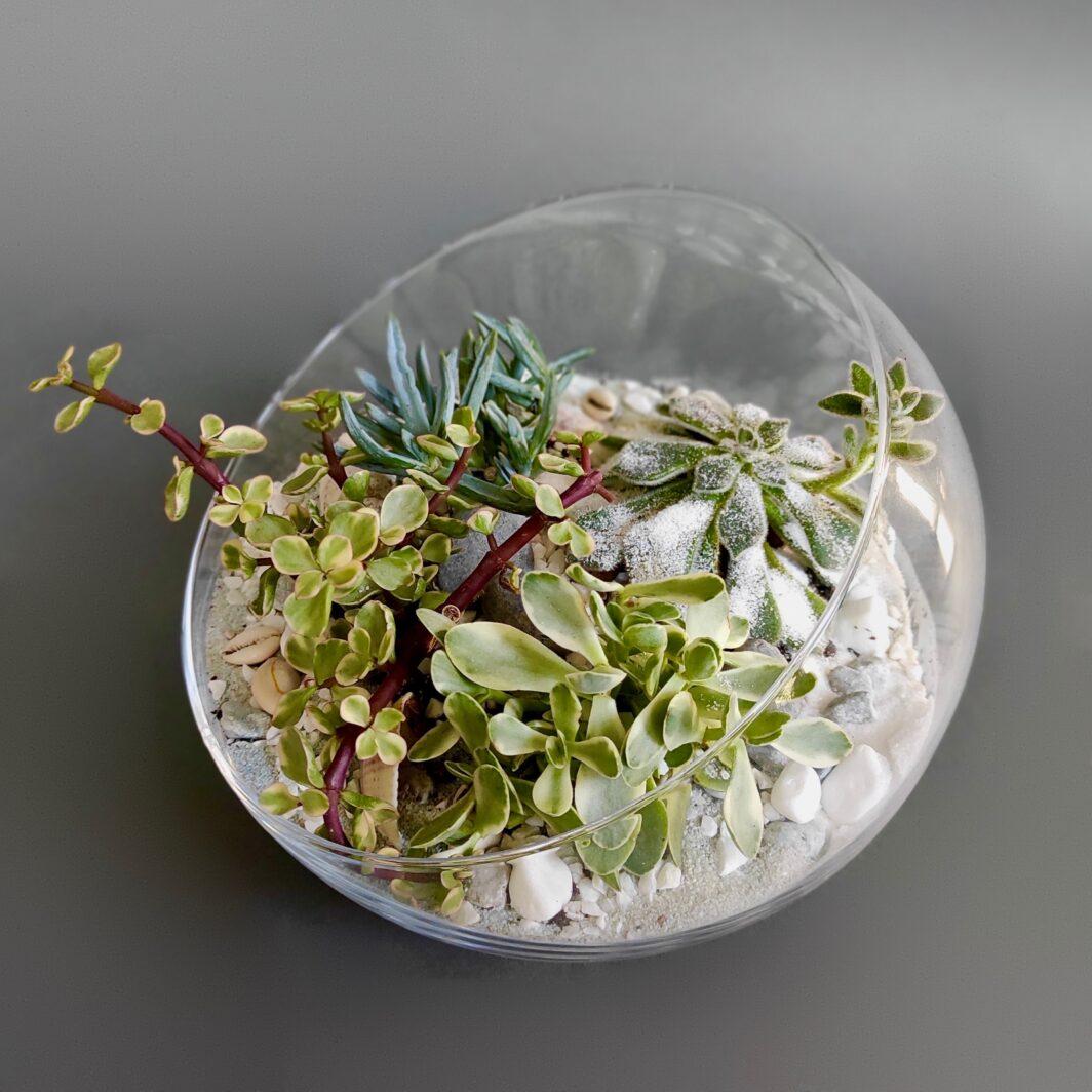 Флорариум Teamo 4119 : композиция из живых растений в стеклянной емкости.